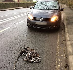 Leopard print onesie on road