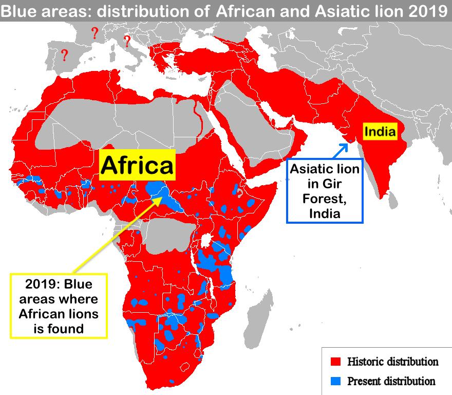 Lion distribution 2019