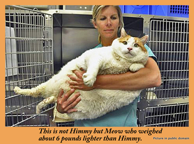 Meow a very heavy cat
