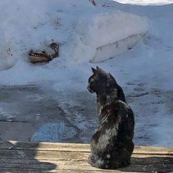 Monty surveys his icy domain
