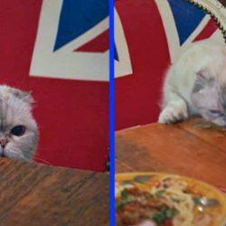 Olivia eats off table