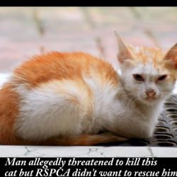RSPCA would not rescue this cat when he was threatened by a man
