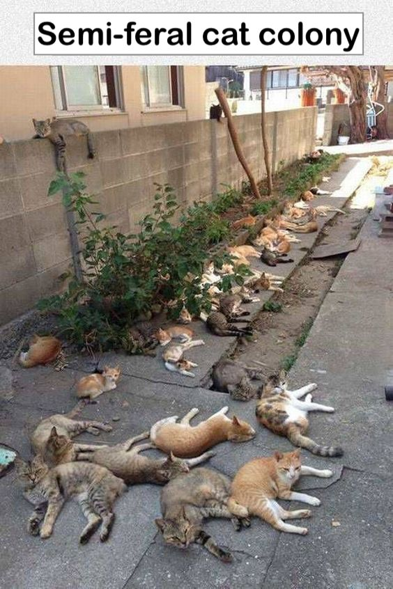 Semi-feral cat colony