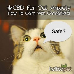 Side effects of CBD for cats