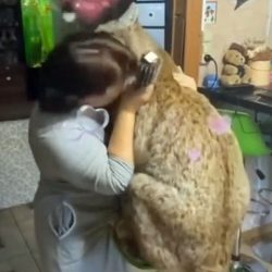 Woman cuddles an enormous Eurasian lynx
