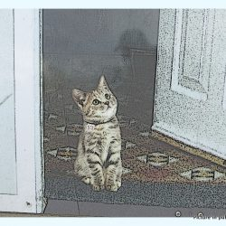 Cat at front door