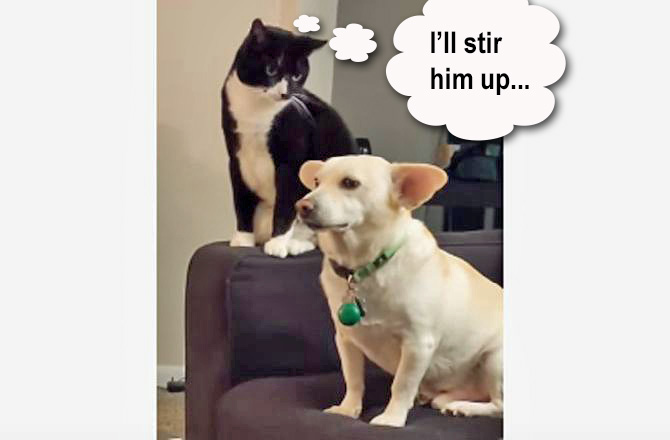 Cat provokes dog