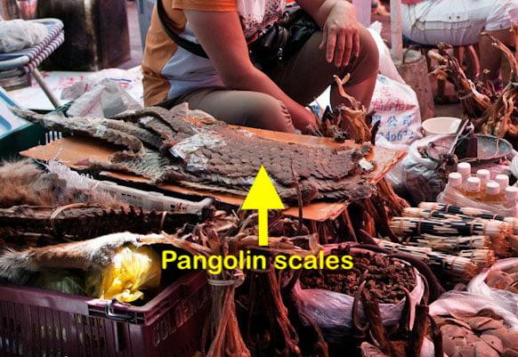 Pangolin parts for sale at China market