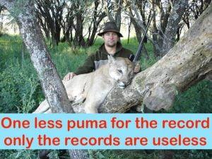 Puma hunted