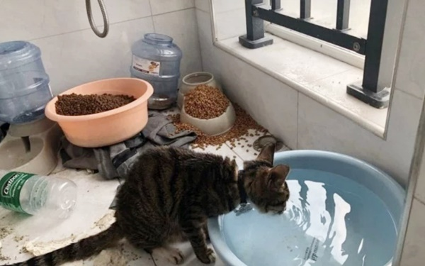 wuhan cat