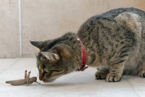 Cat and grasshopper
