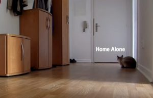 Cat home alone