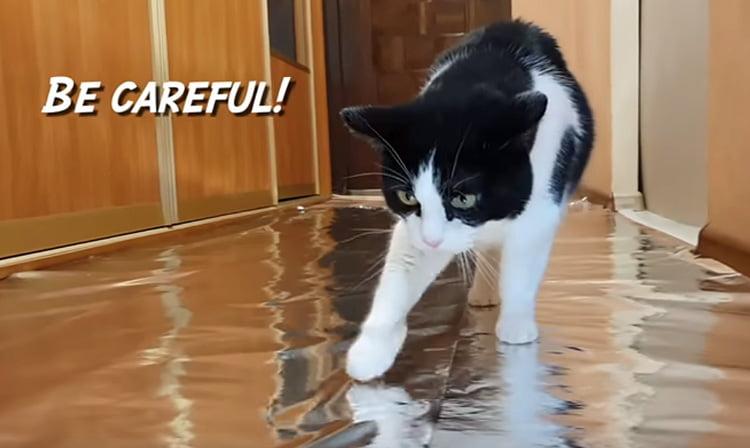Cat walking on tin foil