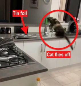 Cat's extreme reaction to tin foil