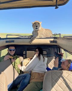 Picture of cheetah joining tourists in the Serengeti is unsurprising