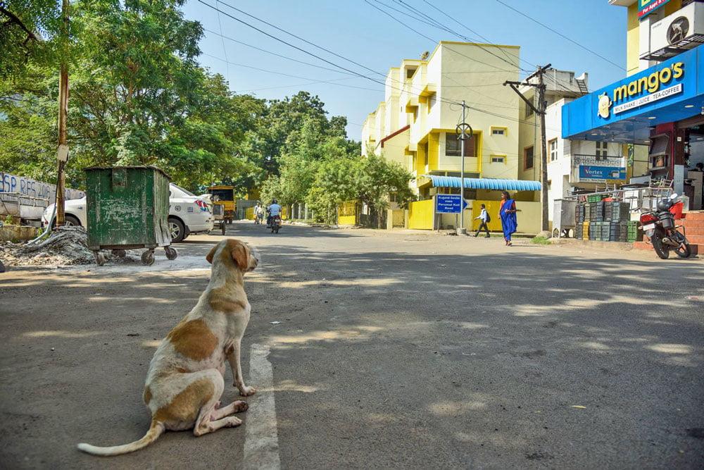 Dog waits for Rita