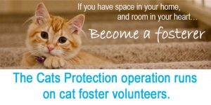 Fostering cats