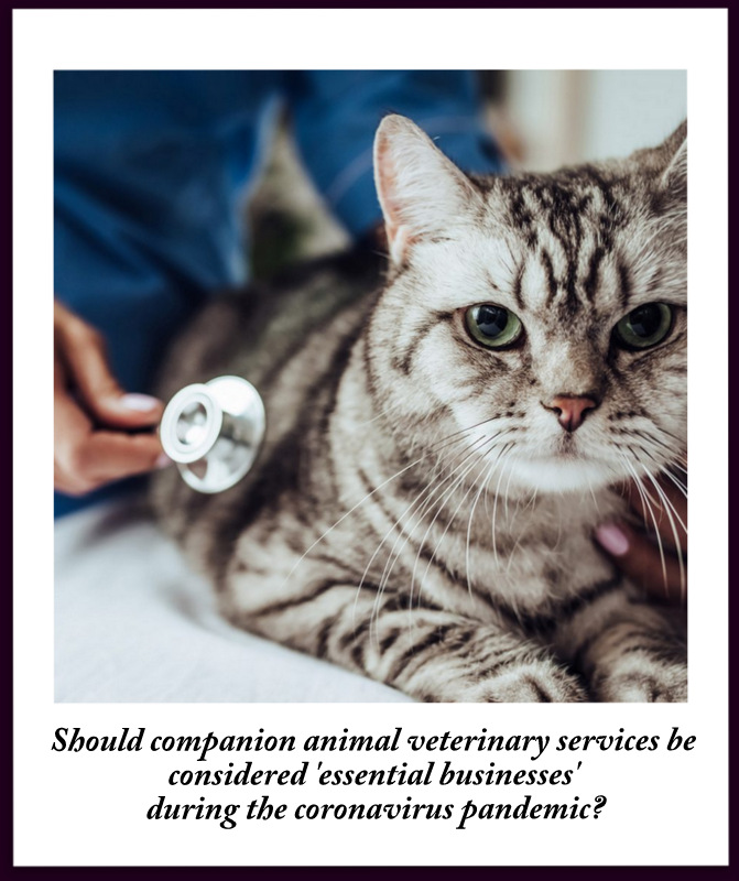 Should veterinary clinics be classified as essential businesses when providing services to companion animals?