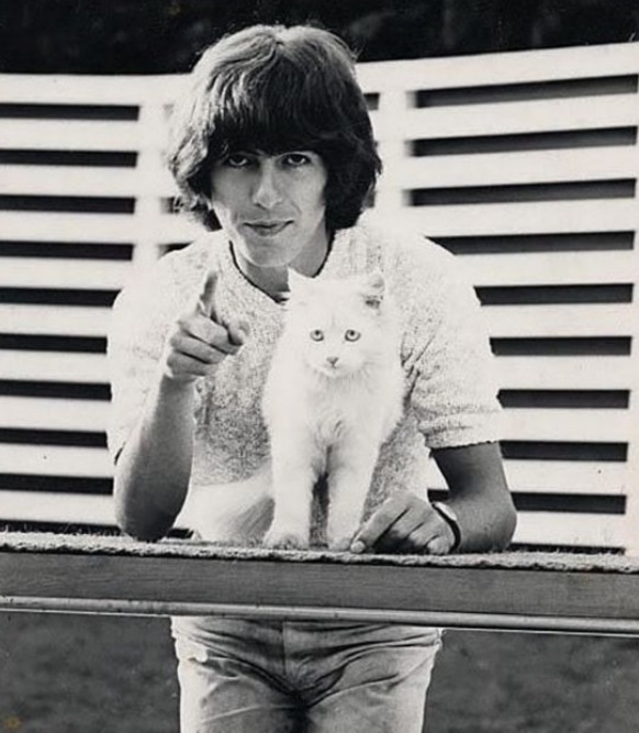Harrison and white cat
