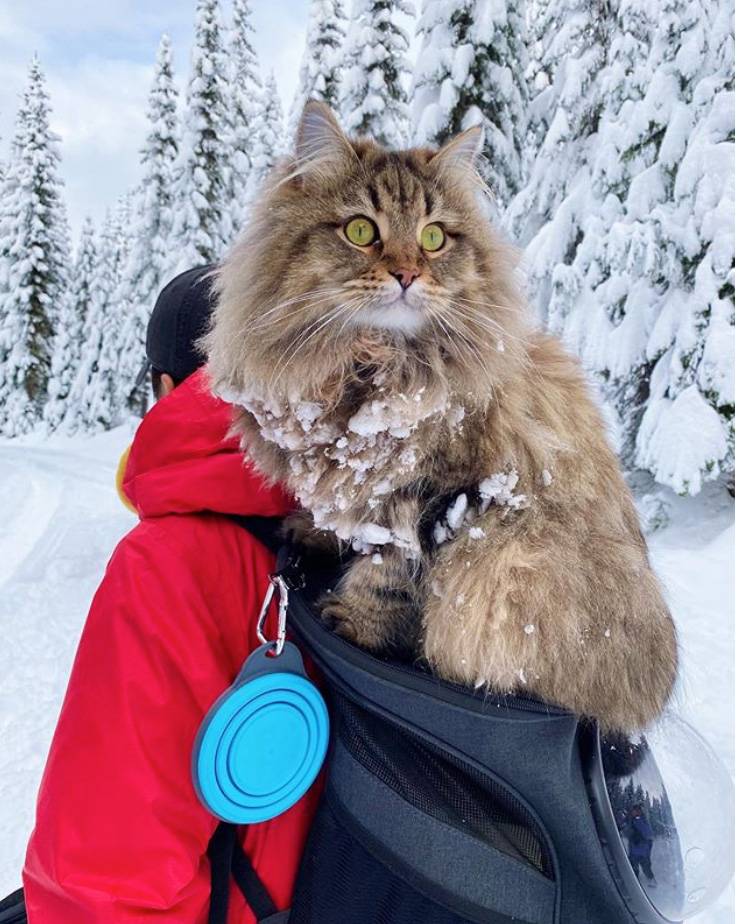 Hiking and trekking cat