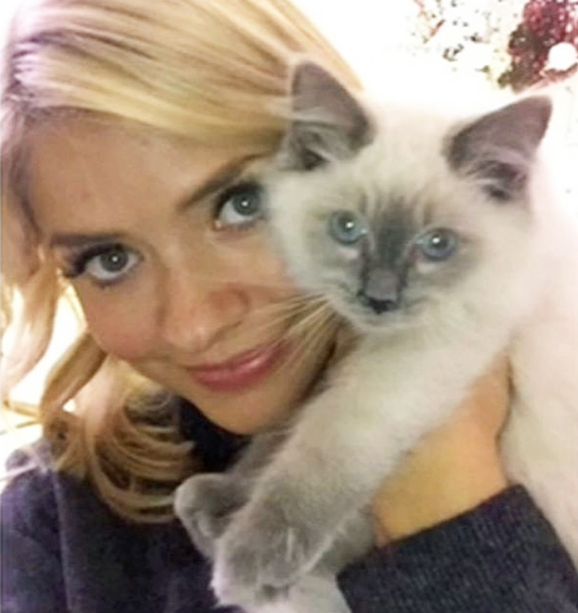 Holly Willoughby and one of her Ragdoll Cats probably Bluebell