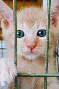 Kitten in cage
