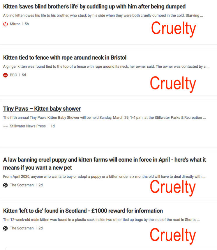 Cat and kitten cruelty stands out