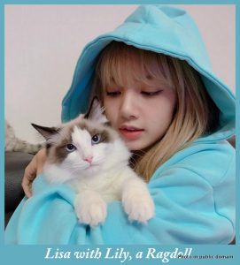 Lisa with Lily a Ragdoll cat