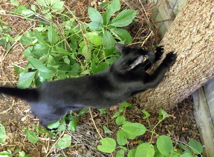 Monty scratching a tree in the backyard