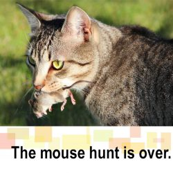 Mouse hunt is over