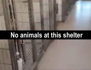 No animals at this shelter