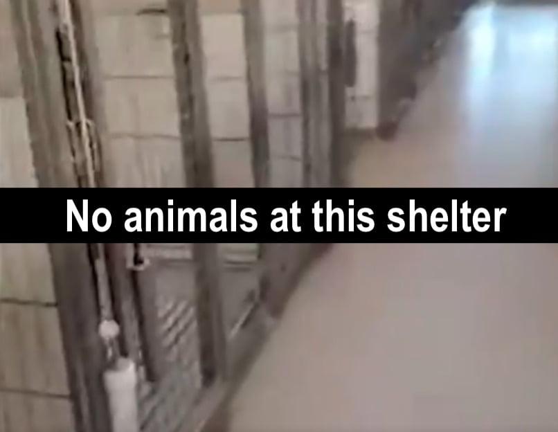No animals at this shelter