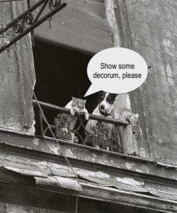 Paris - cat and dog on balcony