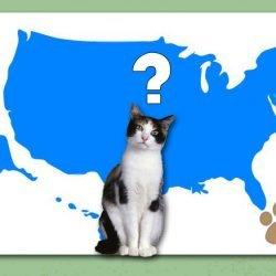 Percentage feral cats?