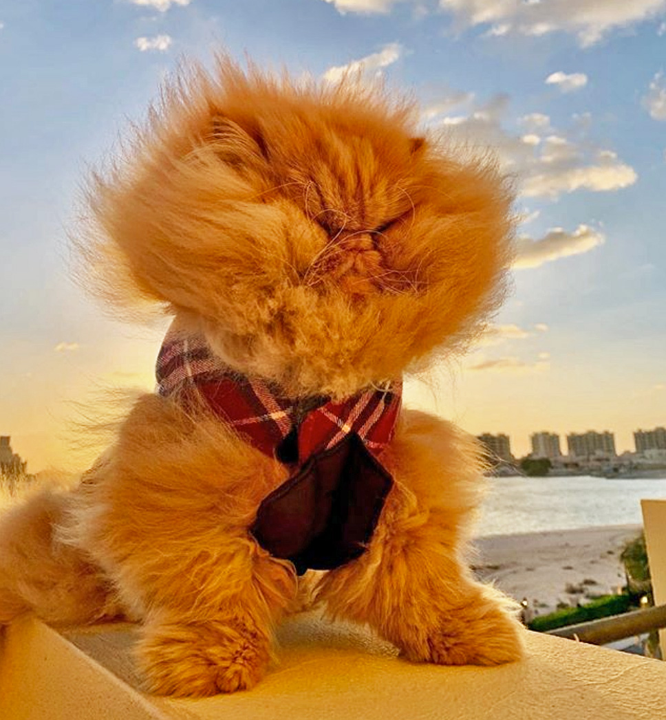 Picture of Persian cat at the seaside near beach