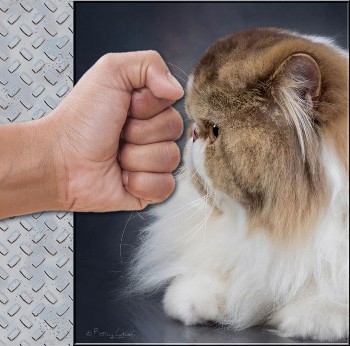 Punch face Persian