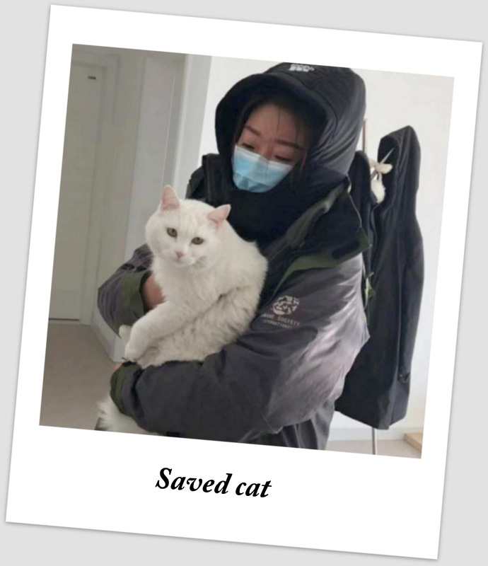 Saved cat