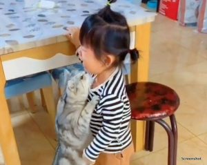 Tabby cat is protective of toddler