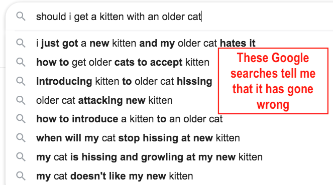 Should I get a kitten for my older cat