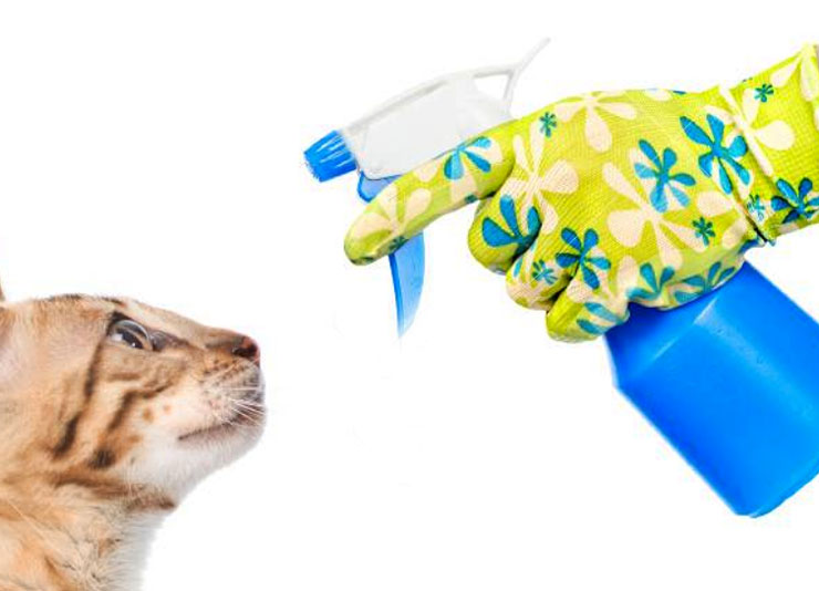 Should  I use a stray bottle on my cat?