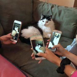The age of cat celebrity captured in this photo