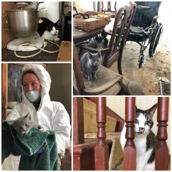 What is like to remove many cats from a run down home which became uninhabiitable. Photo: Wisconsin Humane Society.
