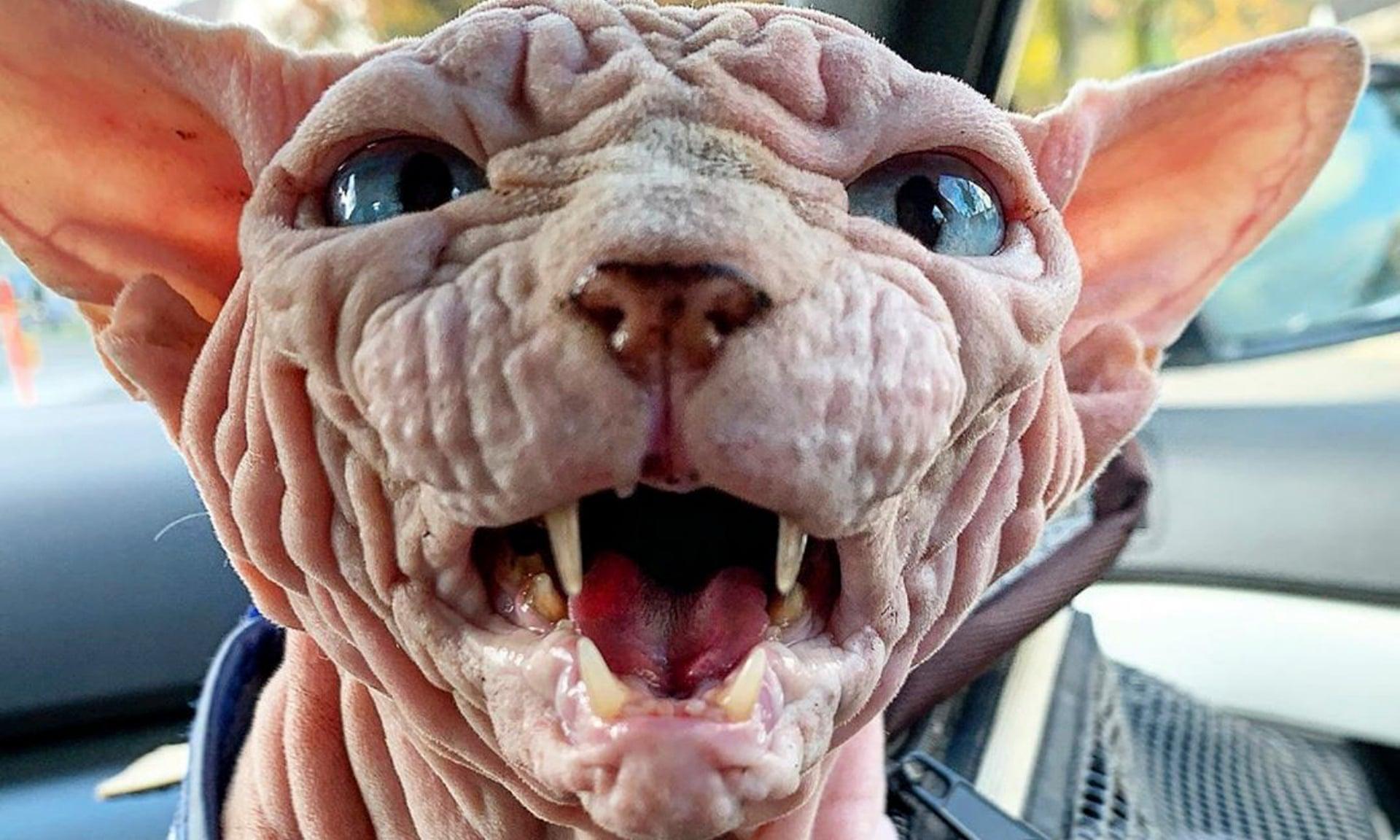 World's scariest cat