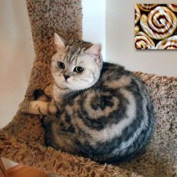 Young cat with spiral tabby coat