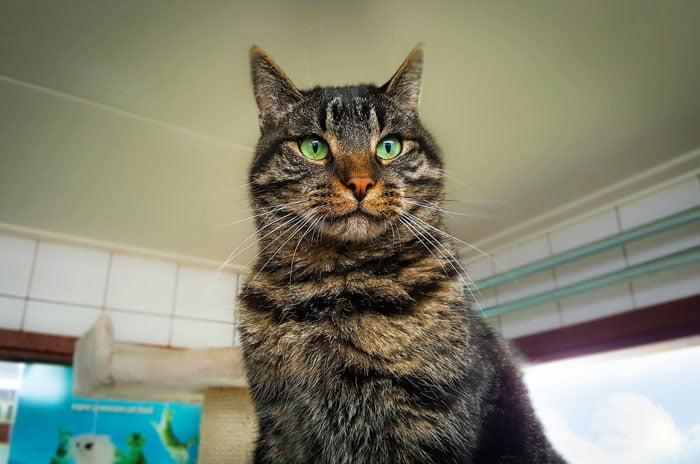 Cat at Dutch shelter