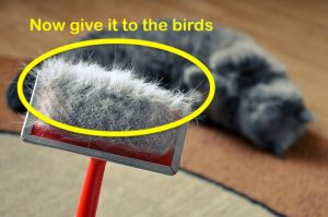 Bird can use cat fur for nest building