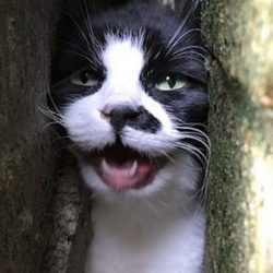 cat rescued from wall