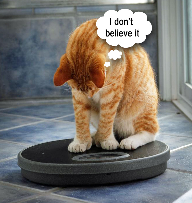 Cat weighing himself