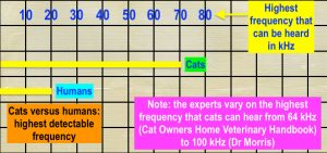 Comparison of upper frequency hearing limit for cats and humans