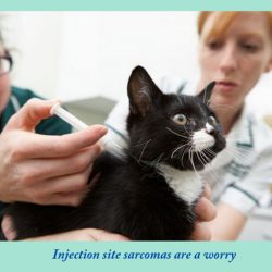 Injection site sarcomas are a worry